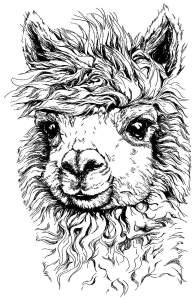 alpaca_head